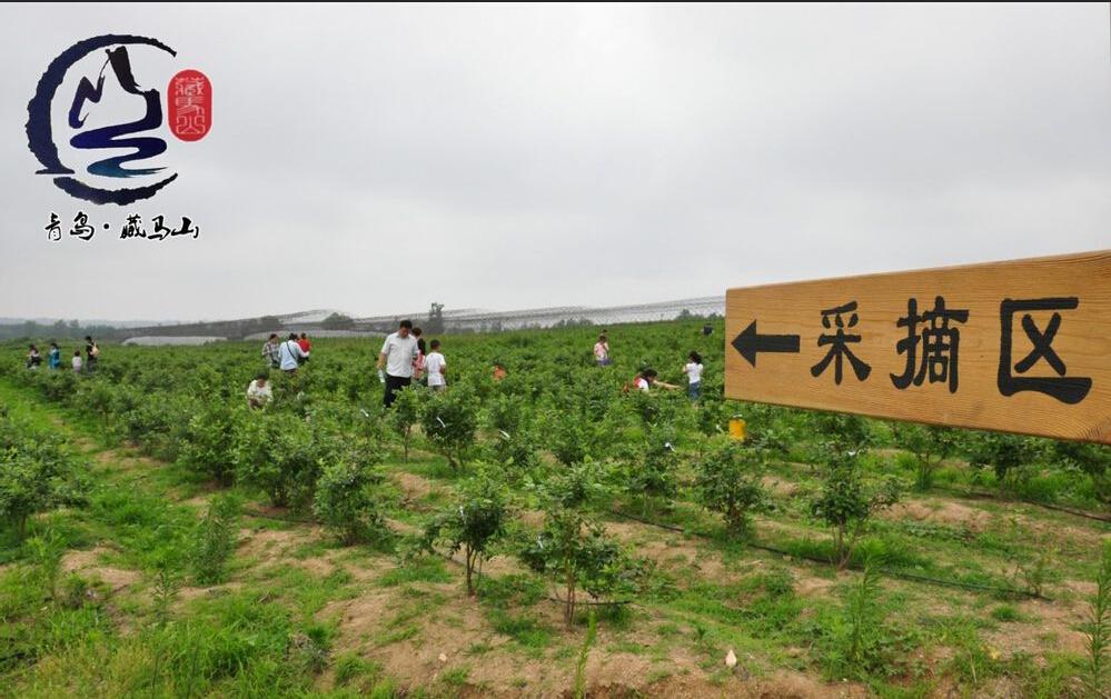 藏马山生态观光园